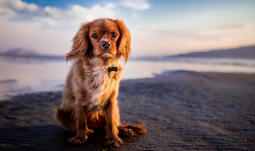 Assurance chien en cas d'accident