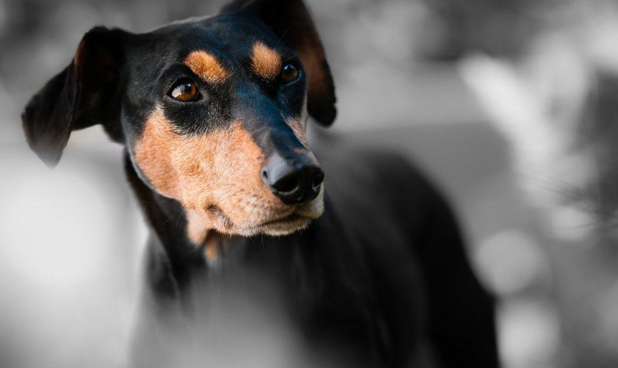 Bien choisir son assurance pour chien
