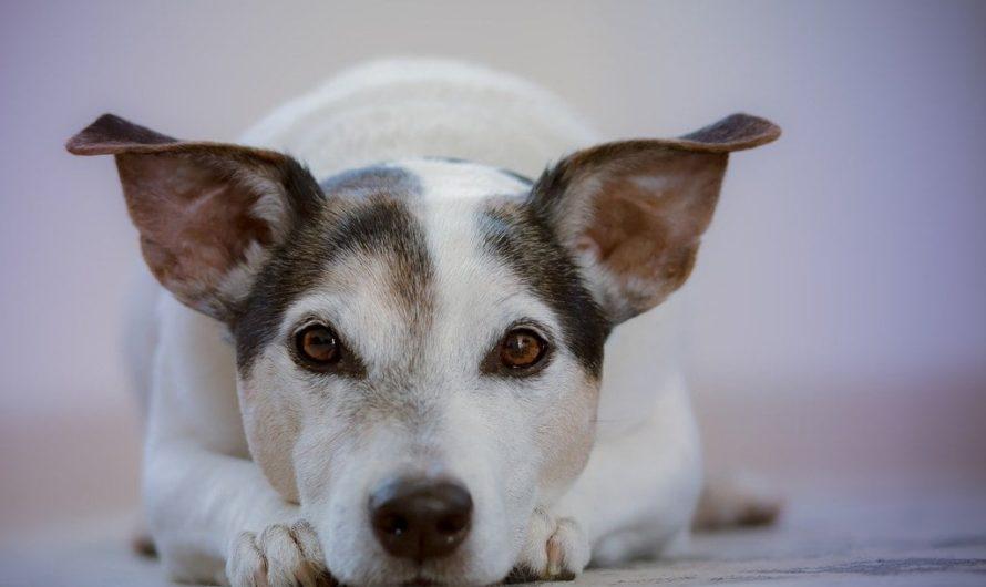 Quel est la meilleur assurance pour chien